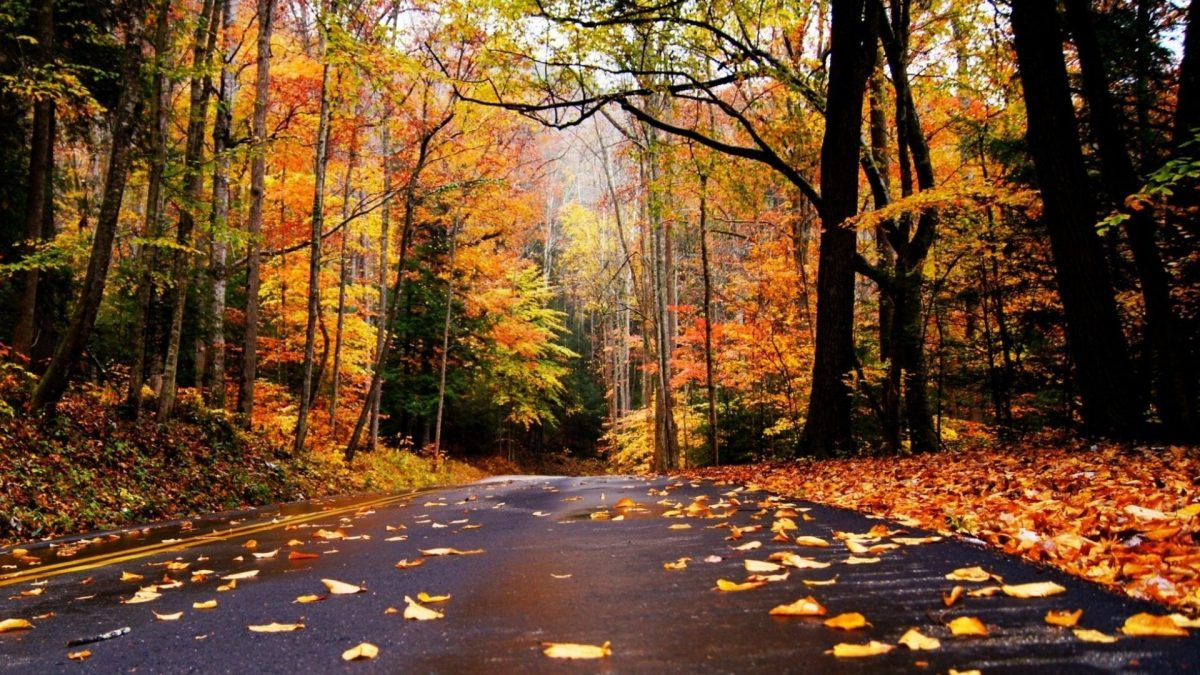 Autumn Road Fallen Leaves Nature Trees Desktop Images